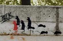 Blek de Rat, 1981